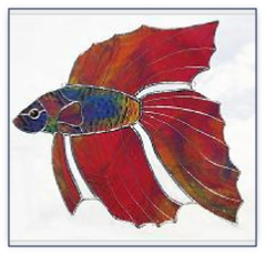 red beta fish
